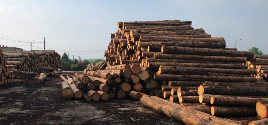 drewno1